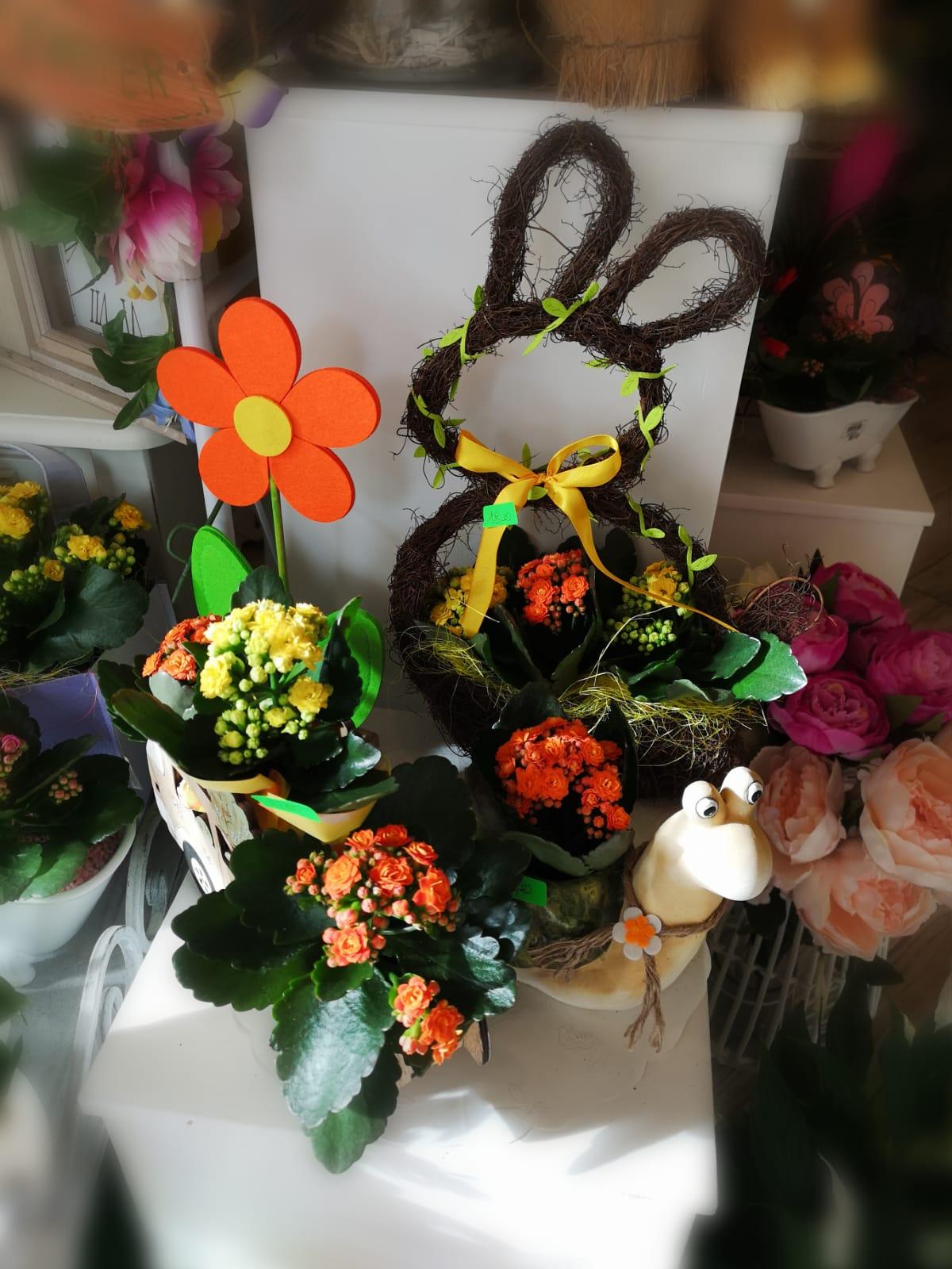 Il Giardino di Sonia Marsili – Piante e fiori